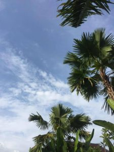 The idea of a palm-tree sky in Bali kept me motivated to save.