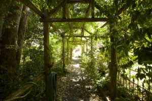The garden tunnel